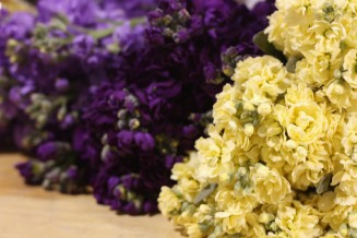 Grades of Stock: Lavender, Purple and Yellow