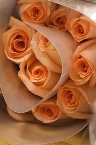 Roses Versilia