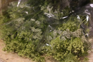Fillers Queen Anne's Lace Green Mist