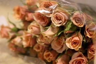 Spray Rose Ilce