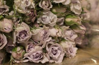 Little Silver Spray Roses