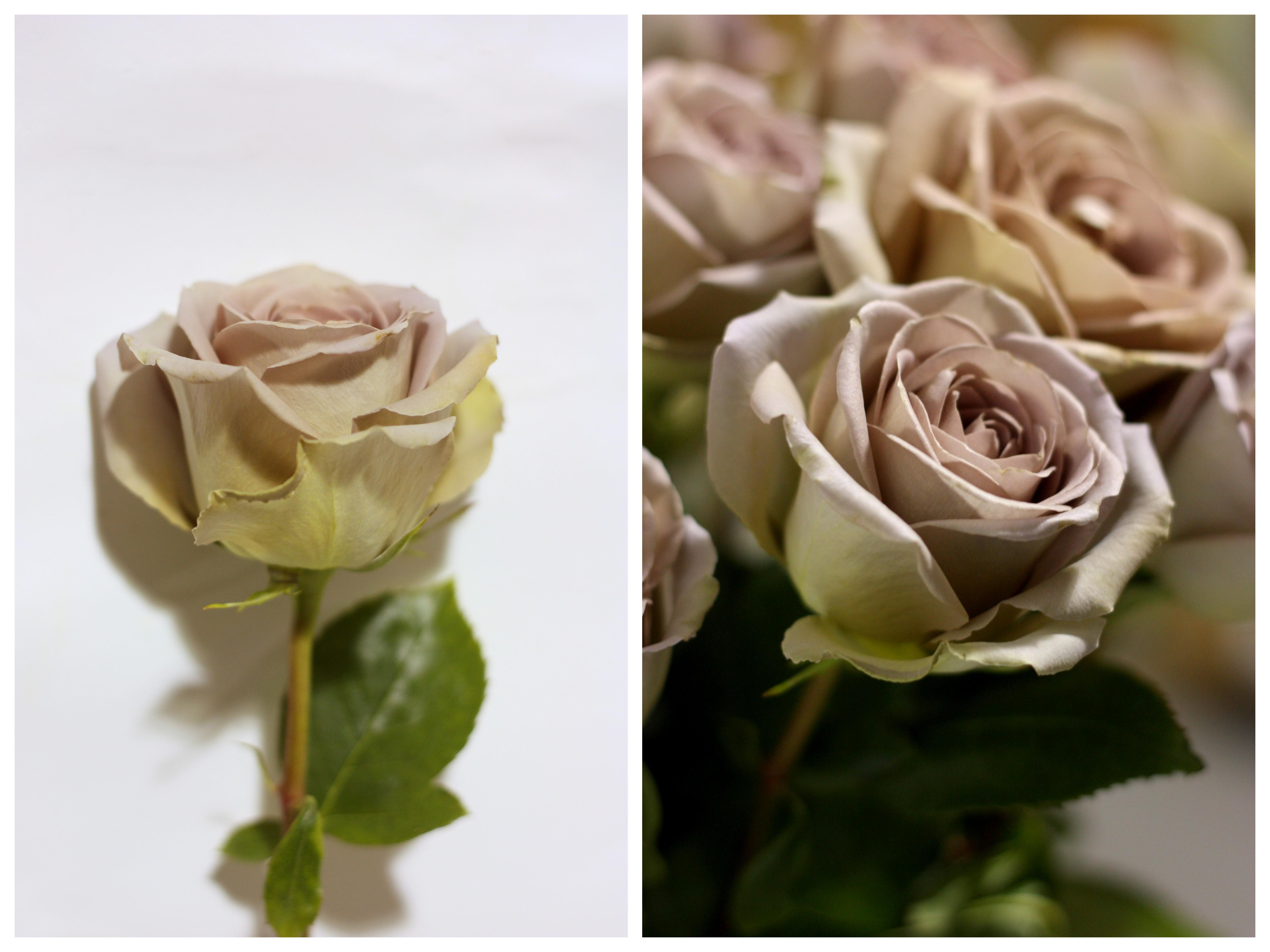 Amnesia Rose Pennock Floral