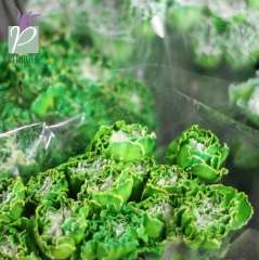 Carnation Fancy Green Tint
