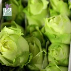 Rose Green Tea IMG_1553 - Copy