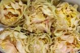 Rose Campanella