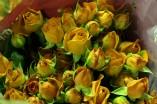 Spray Rose Bebe Orange