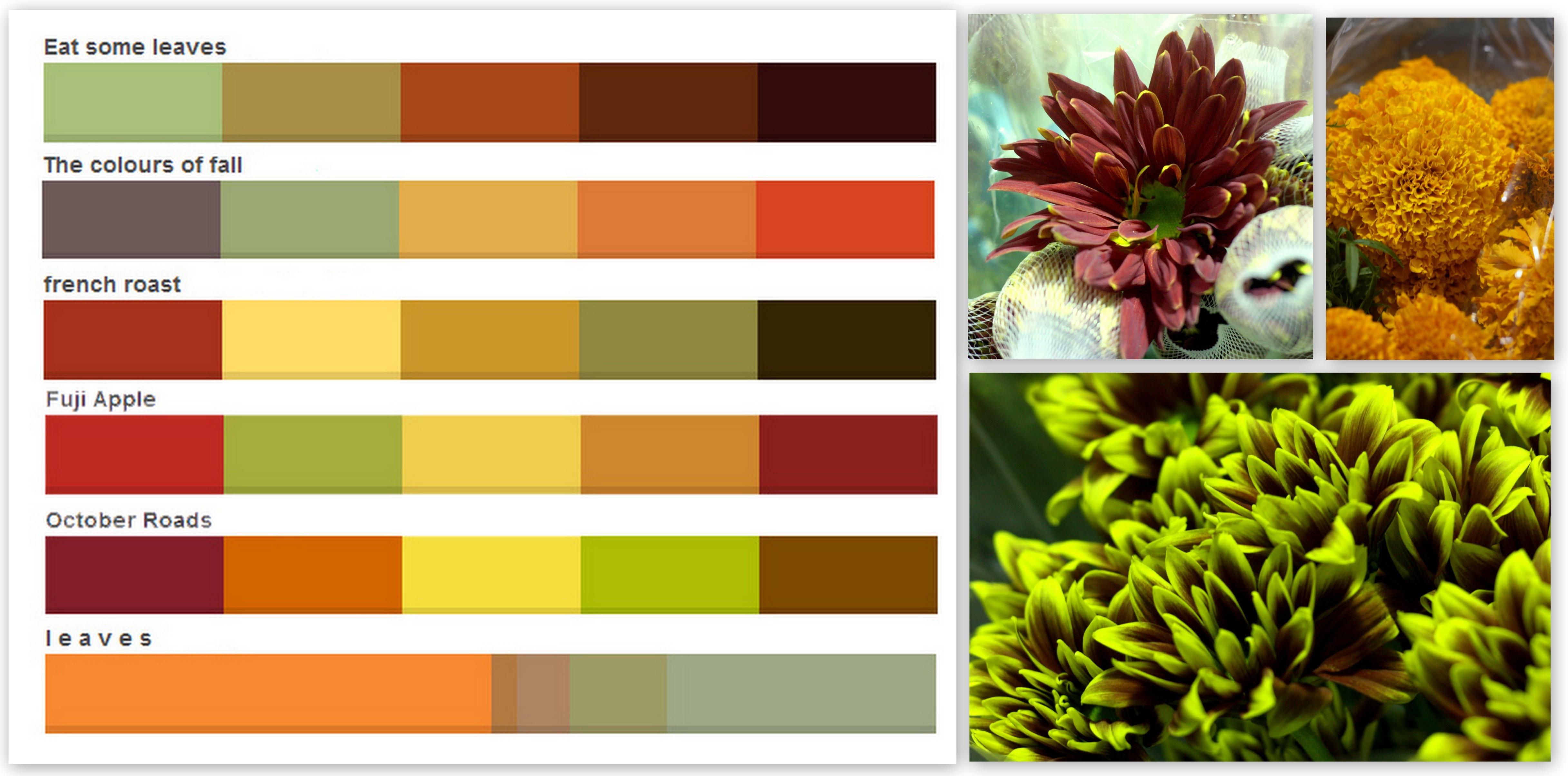 fall colors palettes pennock floral