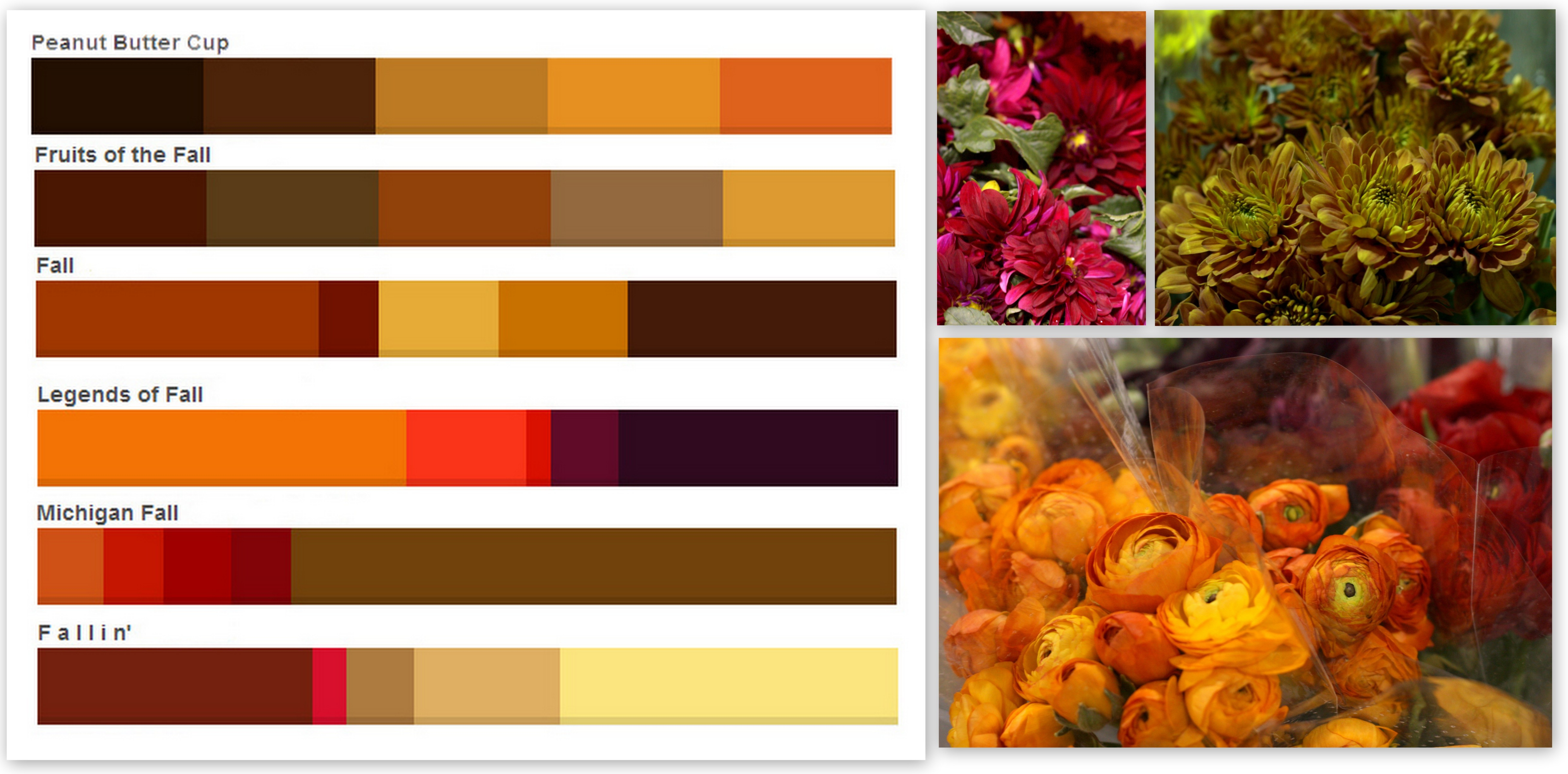 Fall colors palettes – Pennock Floral