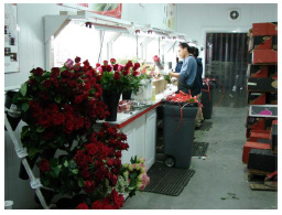 Equiflor Rose Production