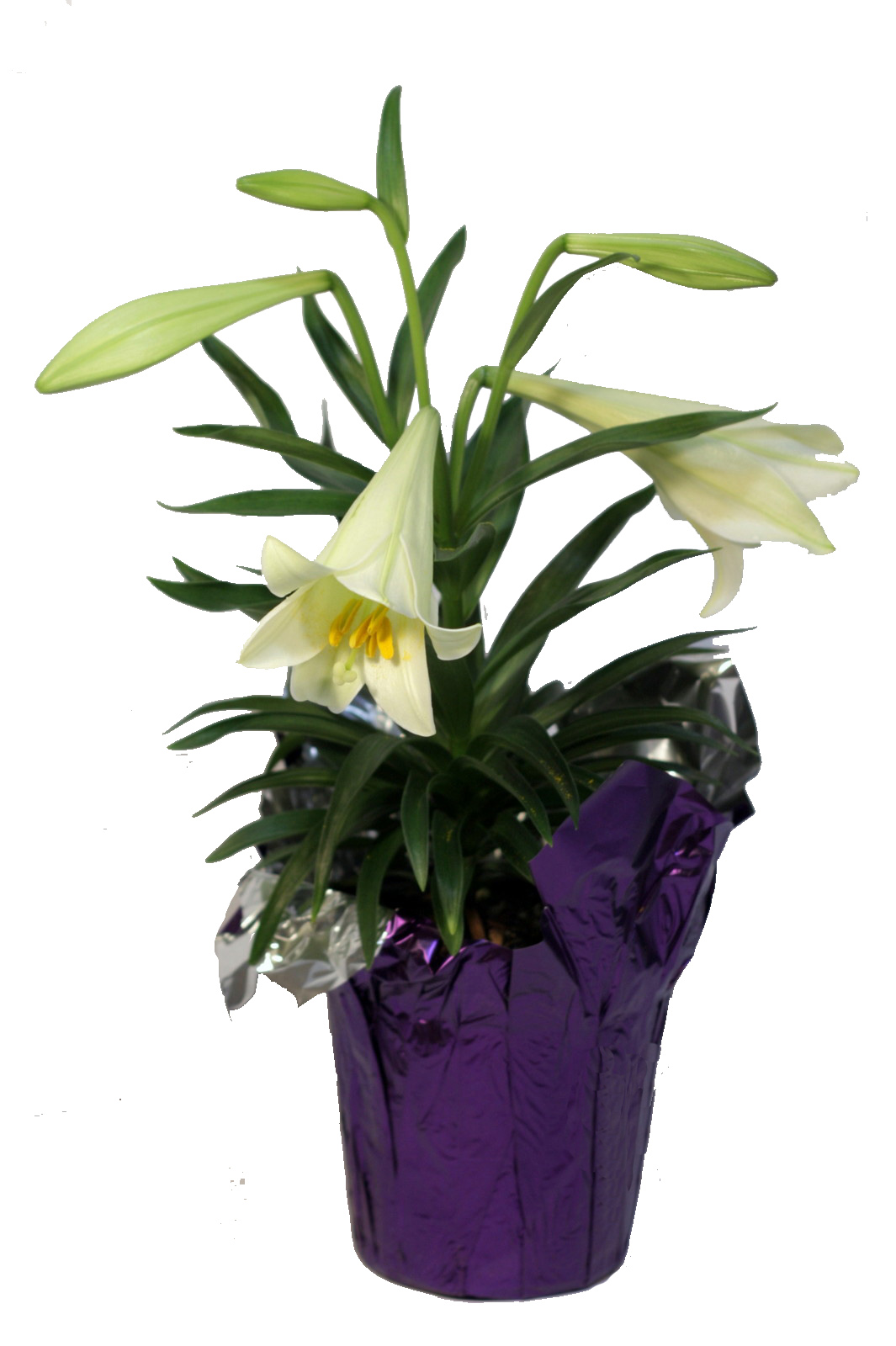 Easter Plants Pennock Floral