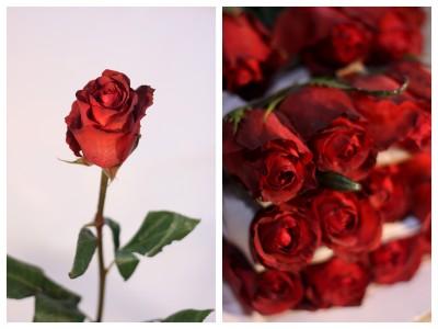 Terracotta Rose