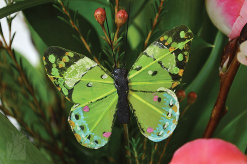Decorative Green Butterfly