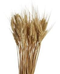 Dried Wheat Bunch