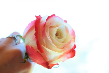 Yashika Rose